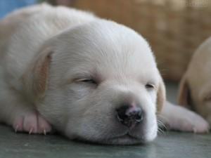 CCZ realiza feira de adoção de animais no próximo sábado